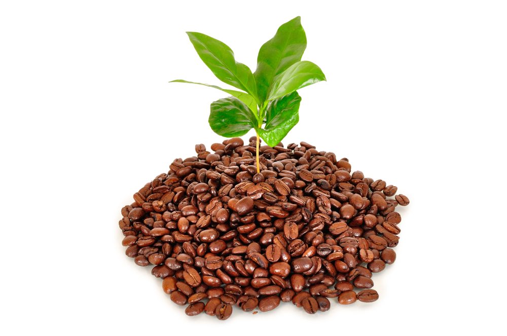 5 unique ways to use coffee grounds for plants and gardening. Black Bedroom Furniture Sets. Home Design Ideas